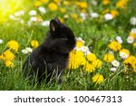 Rabbit baby bunny in green grass and dandelion meadow - stock photo