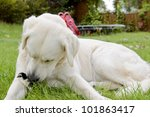 dog with her best friend in the garden - stock photo