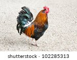 Black and orange rooster or cockerel in profile in a chicken run or yard. - stock photo