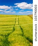 Agricultural wheat field with tractor tracks and blue sky with white clouds - stock photo