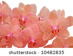Tropical orchid	 - stock photo