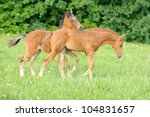 Colt in grass - stock photo