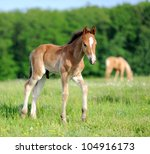 Colt in meadow - stock photo