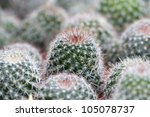 cactus spiky succulent green plants with spines - stock photo