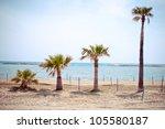 series of growing palms - stock photo