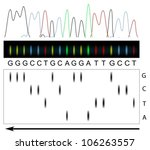 DNA sequencing principle - stock vector