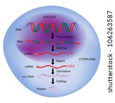 Gene expression, central dogma of molecular biology - stock photo