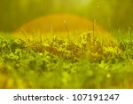 spring grass background at sunset - stock photo