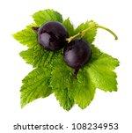 Black Currants - stock photo