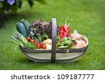 freshly harvested home grown vegetables in a wooden trug - stock photo