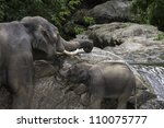Mother and Baby Asian Elephants (Elephas maximus) play by the river's edge. - stock photo