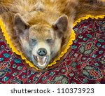 Cinnamon bear rug (Ursus americanus cinnamomum) at the Chateau de Mores State Historic Site near Theodore Roosevelt National Park in Medora, North Dakota - stock photo