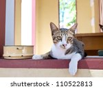 Young cat in the relaxing time - stock photo