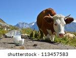Cow and jug of milk. Jungfrau region, Switzerland - stock photo