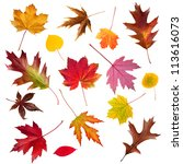 A collection of colorful common Fall leaves isolated on white - stock photo
