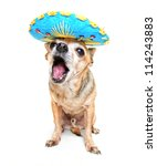 a cute chihuahua in a halloween costume - stock photo