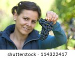 Woman in the vineyard picking grape during wine harvest - stock photo