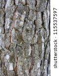 Pine bark - stock photo