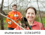 Two women trimming a bough of an apple tree in spring - stock photo