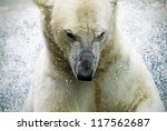 polarbear at a zoo in germany - stock photo
