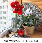 Composition from a white cyclamen and red hippeastrum with a christmas lantern. Eve of Advent - stock photo