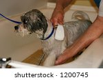dog being bathed at groomer's - stock photo