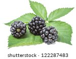 Three blackberry on green leaf isolated on white background - stock photo