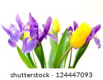 Fresh spring tulips and iris flowers  isolated on white background. selective focus - stock photo