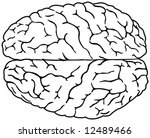 Simple brain drawing - stock vector
