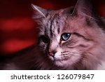 Blue eyed cat in the dark - stock photo