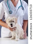 Little doggy at the veterinary - animal care concept - stock photo