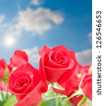 Flowers of red roses  on blurred blue sky background. selective focus - stock photo