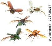 animal set, flying beetle collection isolated - stock photo