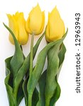 three yellow tulips isolated on white background - stock photo
