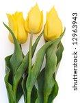 three yellow tulips isolated on white background - stock photo