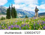 Male hiker walking the trail in the mountains with wild flowers in purple and yellow. Mt.Rainier. Washington State. USA. - stock photo