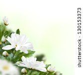 Beautiful white flowers with buds. Floral background. - stock photo