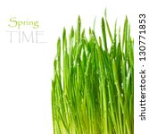 Green spring grass with water drops on a white background. - stock photo