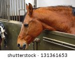horse in manege box - stock photo