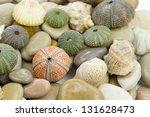 sea urchin an pebble - stock photo