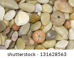 pebble ,sea shell and urchin - stock photo