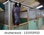 Horse in manege stable - stock photo