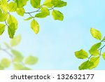 Young succulent leaves on the tree, view from below - stock photo