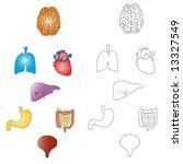 Stylized human main organs - stock vector