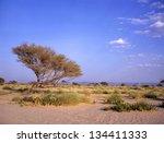 Tree at an oasis between Marib and Seyun in the Arab desert in Yemen - stock photo