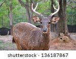 wild deer in alert - stock photo