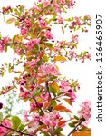 Blossoming apple tree, spring background. selective focus. - stock photo