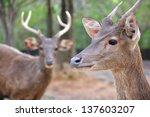 Portrait of wild doe in alert - stock photo