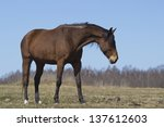 Horse on a spring pasture - stock photo