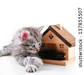 Kitten poses with toy house - stock photo